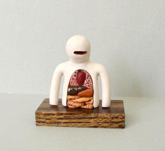 anatomicalmook